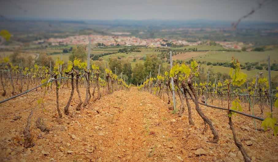 Cagliari: visita a un viñedo con cata de vinos